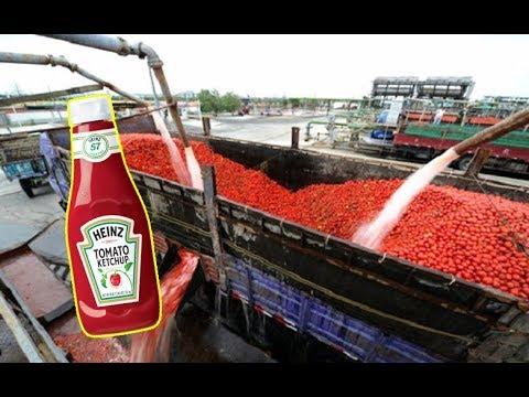 شاهد جولة في أكبر مزارع الطماطم في العالم