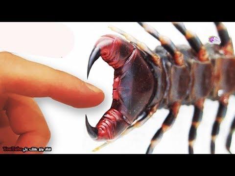 شاهد  أكثر 10 عضّات إيلاماً في عالم الحشرات والحيوان