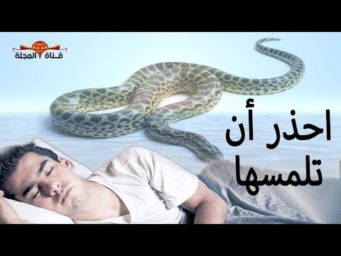 بالفيديوأسباب نهى النبي عن قتل ثعبان البيوت قبل إنذاراه
