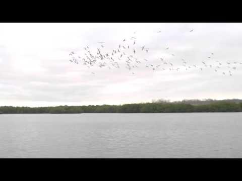 شاهد لقطة مذهلة لعشرات الطيور تغطس لاصطياد أسماك