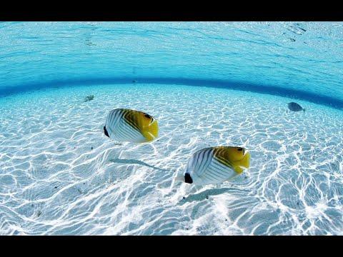 شاهد ظاهرة المحيطات وخلوّها مِن الأسماك