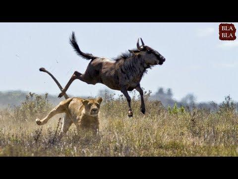 أقوى مبارزات حيوانات صورتها عدسات الكاميرا