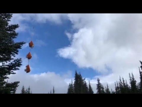 شاهد طائرات الهليكوبتر تنقل مئات الماعز من غابات واشنطن