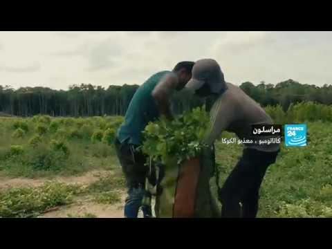 شاهد عصابتان يسيطران على منطقة زراعة نبات الكوكا في كولومبيا