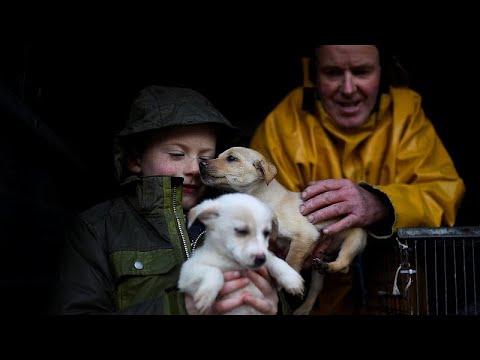 شاهد  توقيف عناصر عصابة مشبوهة في تهريب الكلاب داخل إيطاليا