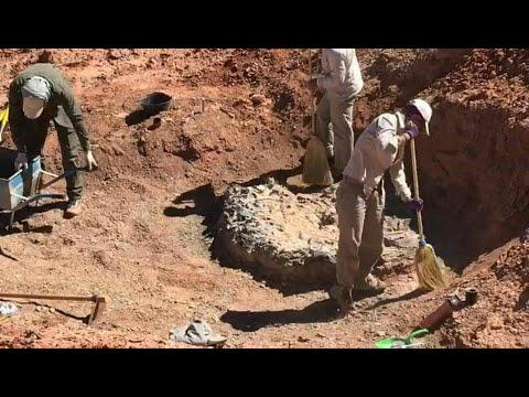 شاهد اكتشاف مقبرة ديناصورات تعود إلى 220 مليون سنة في الأرجنتين