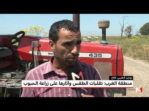 تضرر المحاصيل الزراعية في منطقة الغرب المغربي بسبب الطقس