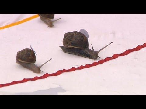 شاهد سباق الحلزونات في بريطانيا يثير الإعجاب