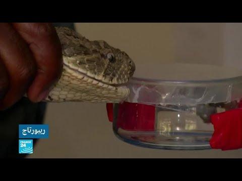 شاهد مركز بحثي في نيروبي يحاول ابتكار أول مضاد للدغات الثعابين في شرق أفريقيا