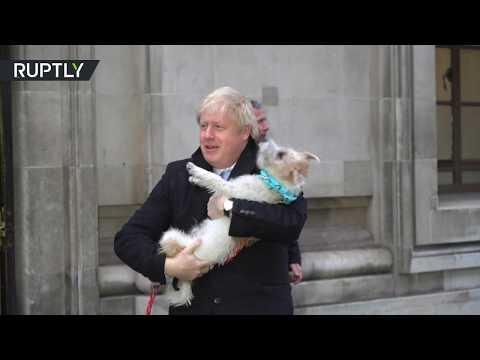 شاهد كلب بوريس جونسون يرافقه أثناء الإدلاء بصوته في الانتخابات