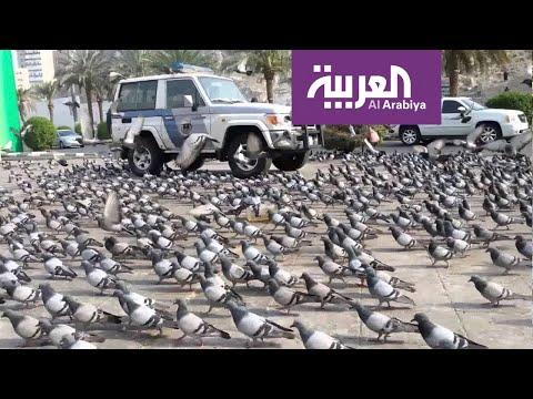 شاهد حَمام مكة يحط في الشوارع المحيطة بالحرم المكي