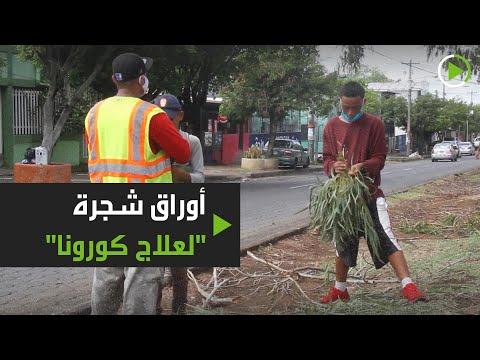 شوارع نيكاراغوا تمتلئ بباعة شجرة أوكالبتوس