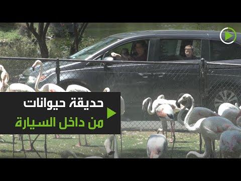 حديقة حيوانات تستقبل الزوار وهم بسياراتهم في فينيكس