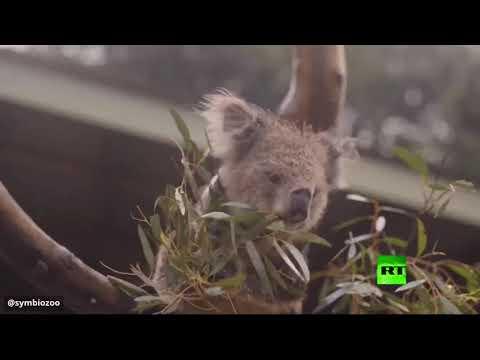 شاهداحتفال الحيوانات بهطول الأمطار في أستراليا