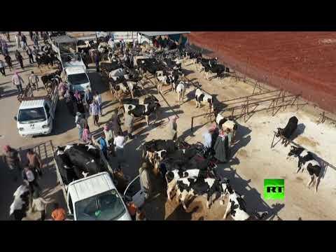 شاهد انخفاض الطلب على الأضاحي بسوق معرة مصرين في سورية