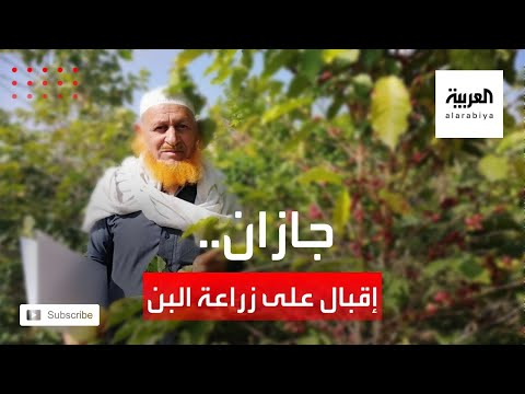 شاهد إقبال متزايد على زراعة البن في منطقة جازان السعودية