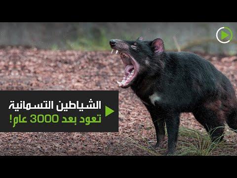 شاهد إطلاق حيوانات الشيطان للبر في محمية طبيعية خالية