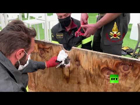 شاهد إنقاذ قطة صغيرة علق رأسها في حفرة بلوح خشبي في إيطاليا