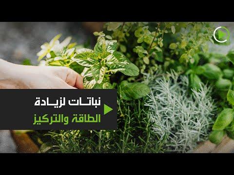 شاهد نباتات وأعشاب تُزيد الطاقة وتُخلصك من التشتت والخمول