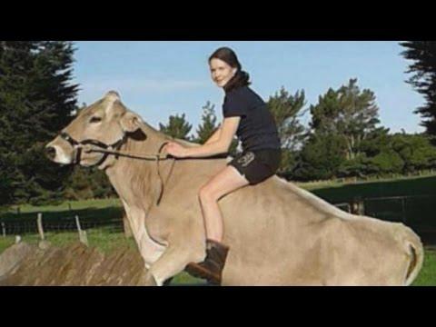 صوت الإمارات - نيوزلندية تروض الأبقار بعد منعها من ركوب الخيل