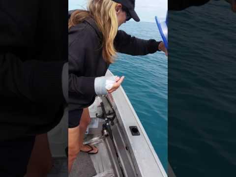 صوت الإمارات - شاهد أسترالية تصطاد الأسماك بيد واحدة