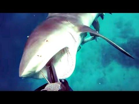 صوت الإمارات - شاهد أسترالي يوثق هجوم سمكة قرش عليه