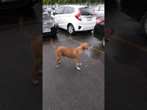 صوت الإمارات - شاهد كلبة ضالة لديها مهارات بهلوانية