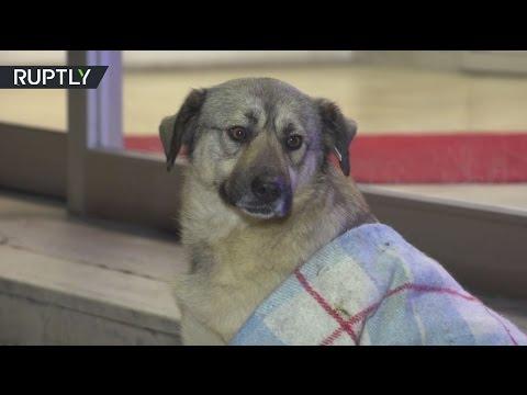 صوت الإمارات - بالفيديو كلاب شاردة تجد ملجأ لها في مجمع تجاري