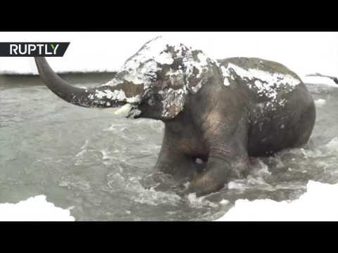 صوت الإمارات - بالفيديو حيوانات أوريغون يلهون في الجليد