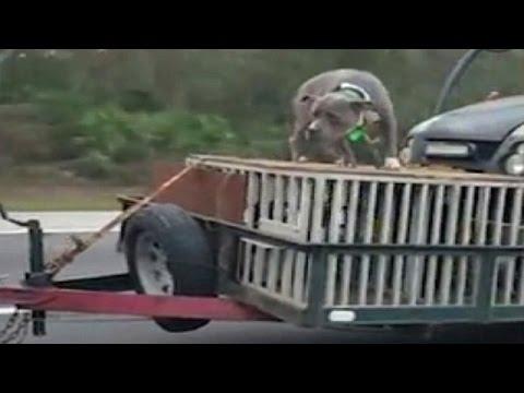 صوت الإمارات - رجل يعرض كلبه للخطر أعلى السيارة