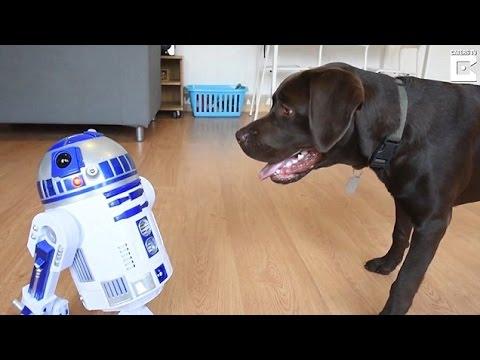 صوت الإمارات - شاهد رد فعل كلب عندما رأى روبوت لأول مرة