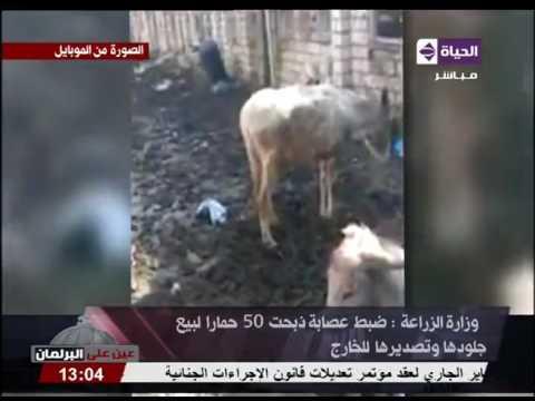 صوت الإمارات - شاهد توقيف عصابة ذبحت 50حمارًا