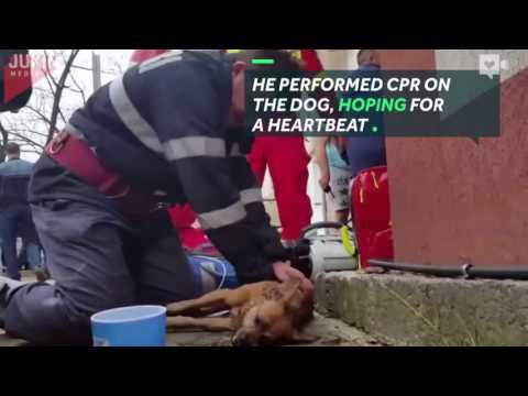 صوت الإمارات - بالفيديو رجل إطفاء يعطي قبلة الحياة إلى كلب يحتضر