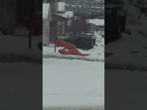 صوت الإمارات - شاهد  اللعب في الثلج على طريقة الديناصورات