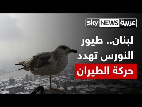 صوت الإمارات - شاهد طيور النورس تهدد سلامة الطيران المدني